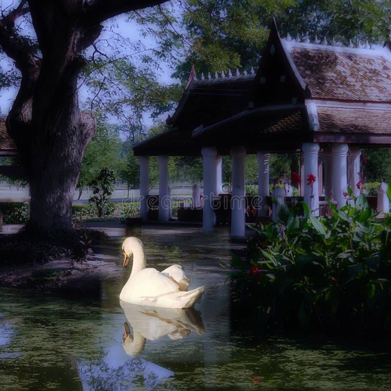 Swan swimming in peaceful lake stock photos