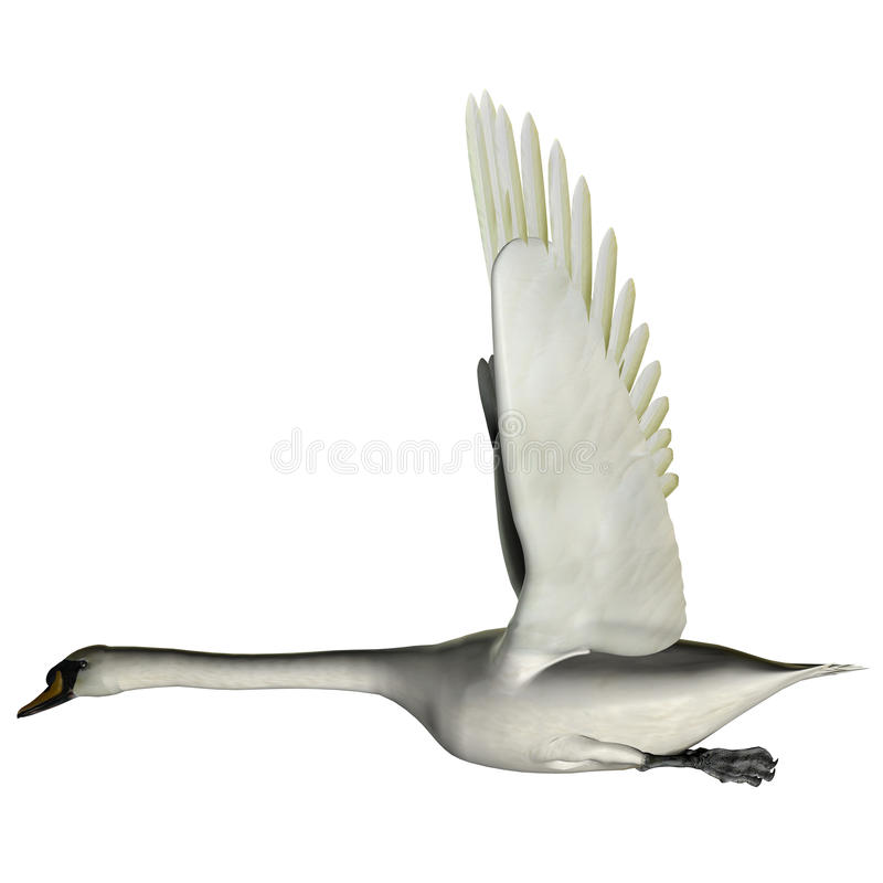 Download Swan Wings Up stock image. Image of avian, tetra, pod - 33069655