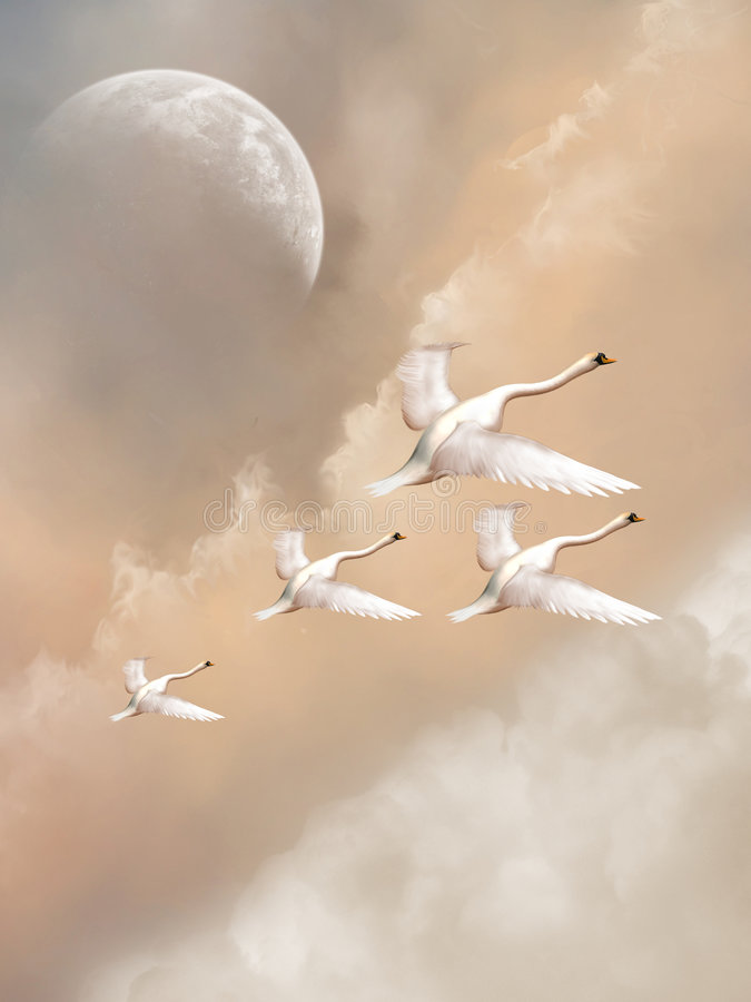 Download Swans stock photo. Image of background, peaceful, backdrops - 5492928