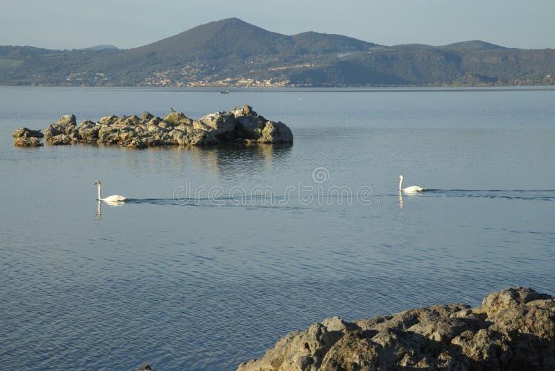 Bracciano`s lake, view from Anguillara Sabazia. Swans into Bracciano`s lake, view from Anguillara Sabazia, province of Rome, Lazio, Italy stock photography