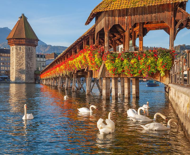 Swans at the Chapel Bridge in Lucerne, Switzerland. Swans at the famous Chapel Bridge over on the Reuss river in the city of Lucerne, Switzerland stock photos