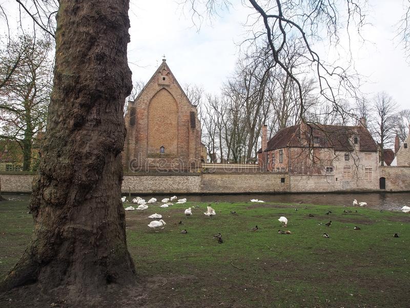 Swans in the city center of Brugge, Belgium royalty free stock photo