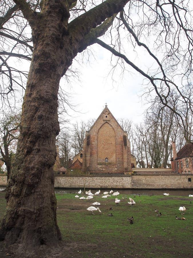Swans dans le centre-ville de Bruges, Belgique image stock