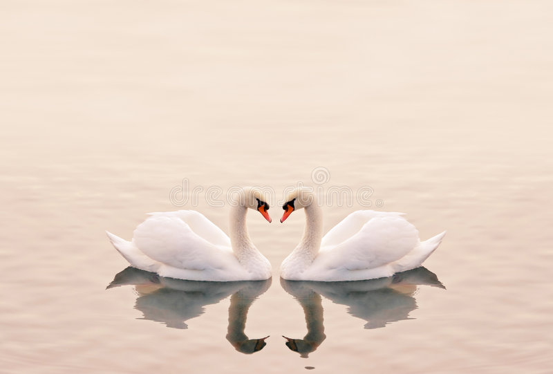 Swans Heart Royalty Free Stock Image
