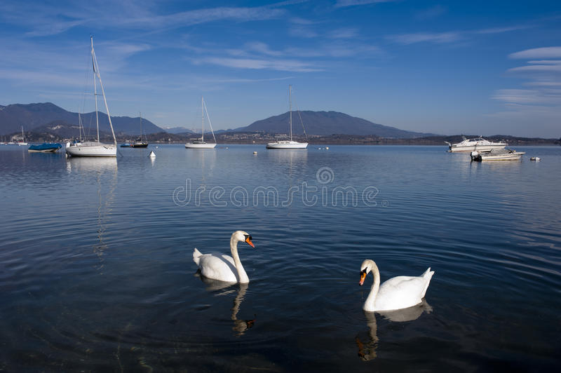Swans in Lake Maggiore. Two swans and boats in Lake Maggiore, Italy stock images