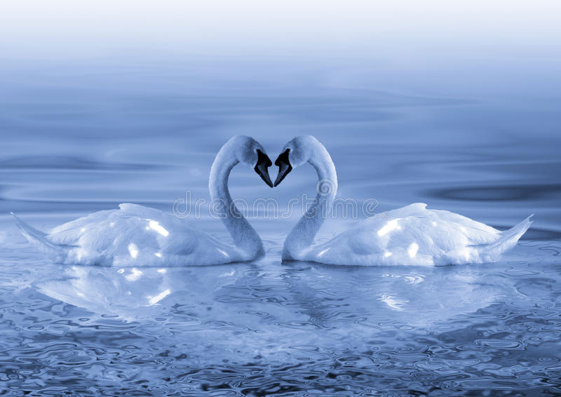 Download Swans Love Stock Image - Image: 29094591
