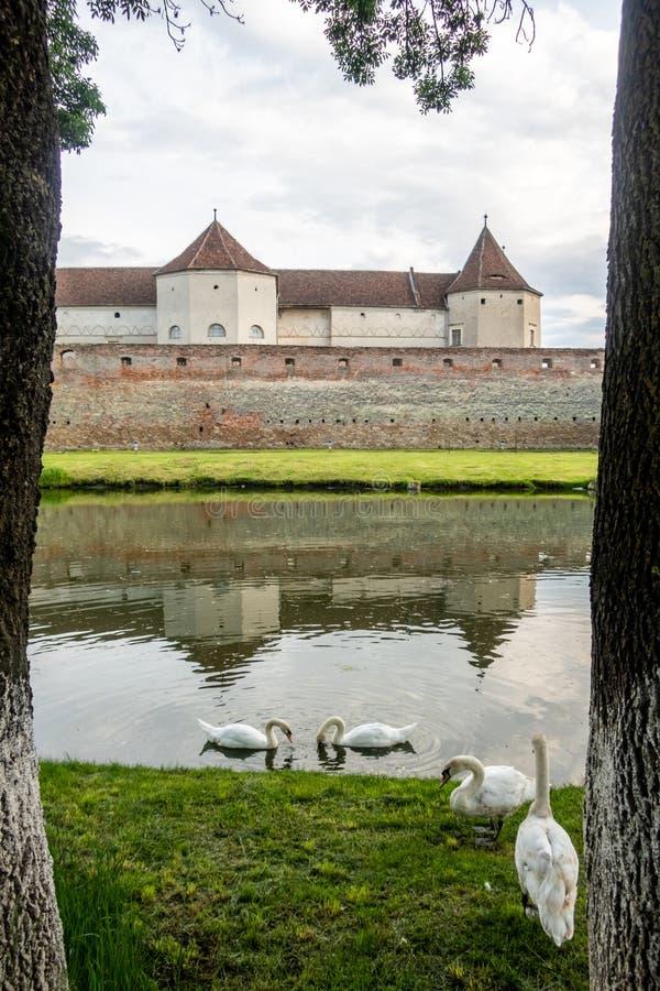 Swans at the moat around medieval Fagaras Citadel. Făgăraș, Brașov County, Transylvania, Romania. Fagaras Citadel dates back to 1310. It has an stock images