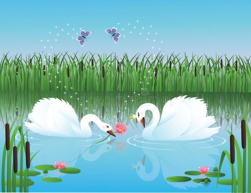swans två royaltyfri illustrationer