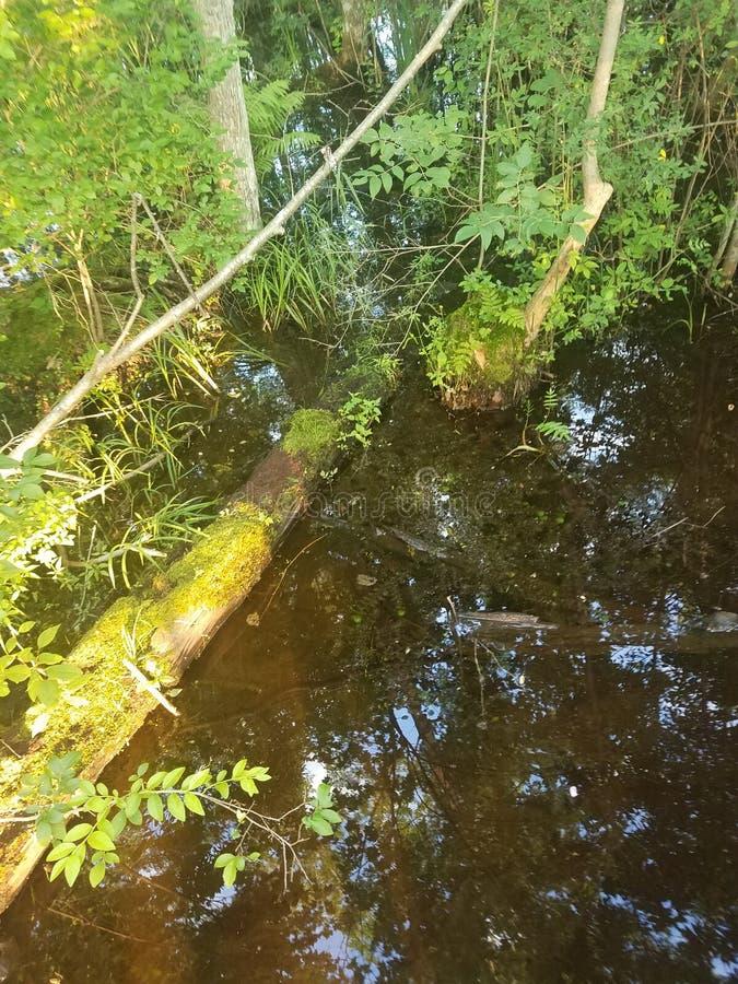 Swamp Thing royalty free stock photo
