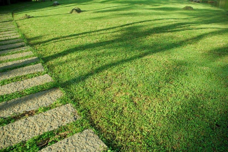 Download Sward stock image. Image of pasture, green, summer, sward - 7554405