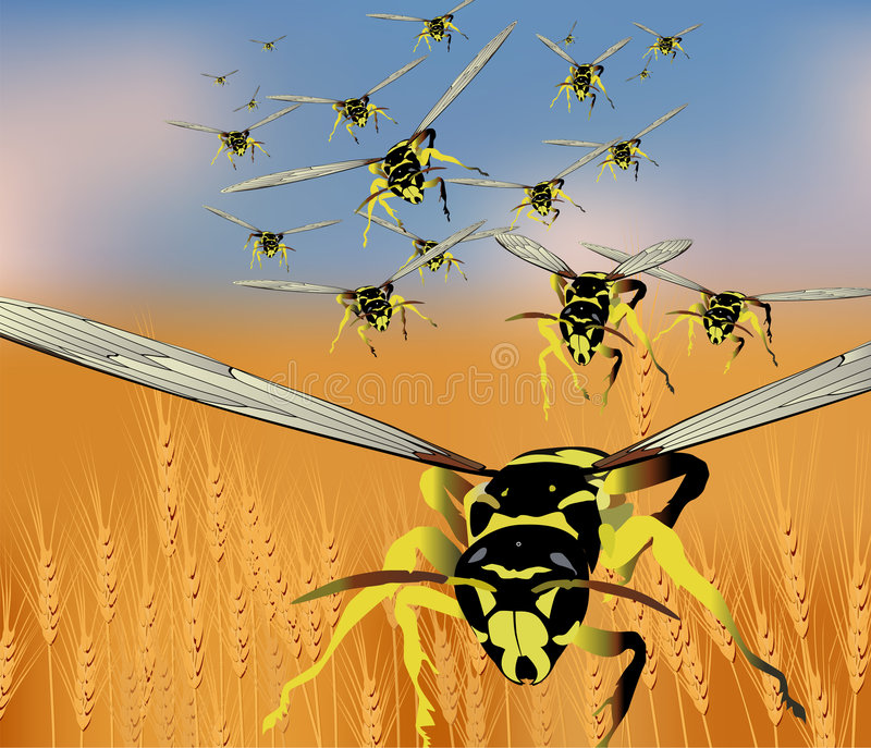 Swarm. A swarm of wasps royalty free illustration