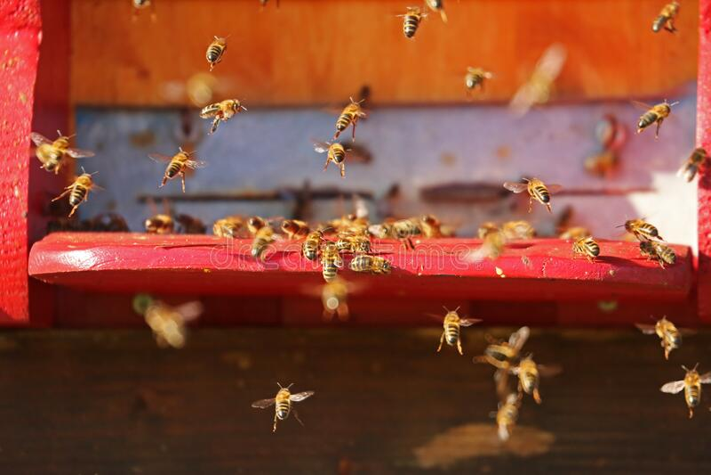 Swarm Of Bees Free Public Domain Cc0 Image