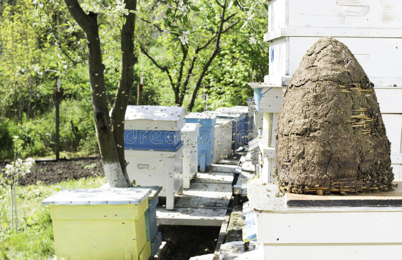Swarm of bees fly to beehive. Sun light stock photography
