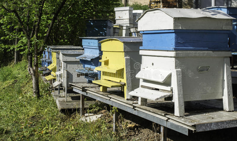 Swarm of bees fly to beehive. Sun light stock image