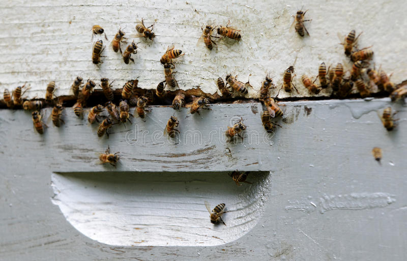 Download Swarm of bees stock image. Image of hives, agriculture - 39265155