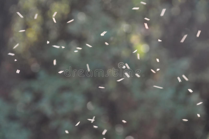 Swarm of flies royalty free stock image