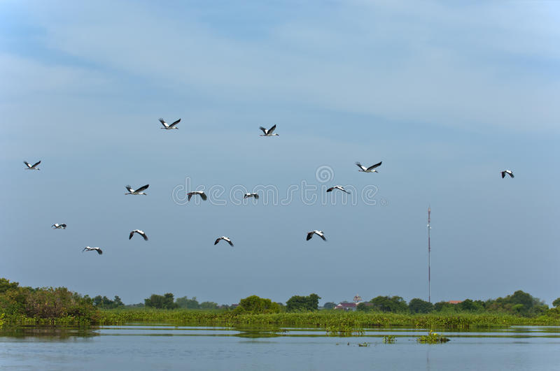 Download Swarm Of Storks Royalty Free Stock Photography - Image: 35471727