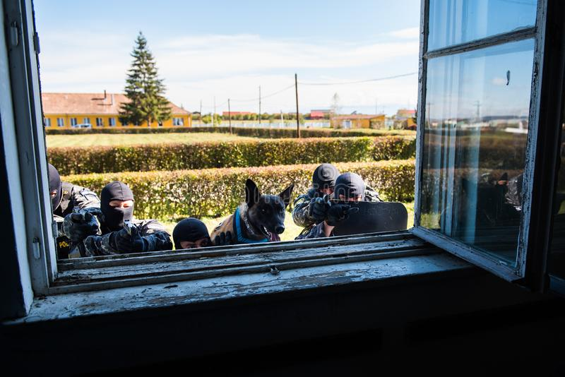 SWAT team. Special forces intervention. Romanian Police SWAT team in action. The team has 5 members and one dog all focused and ready for the ambush. Their lives royalty free stock photo