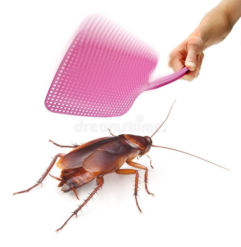 Swatter de mosca de la cucaracha del parásito fotos de archivo