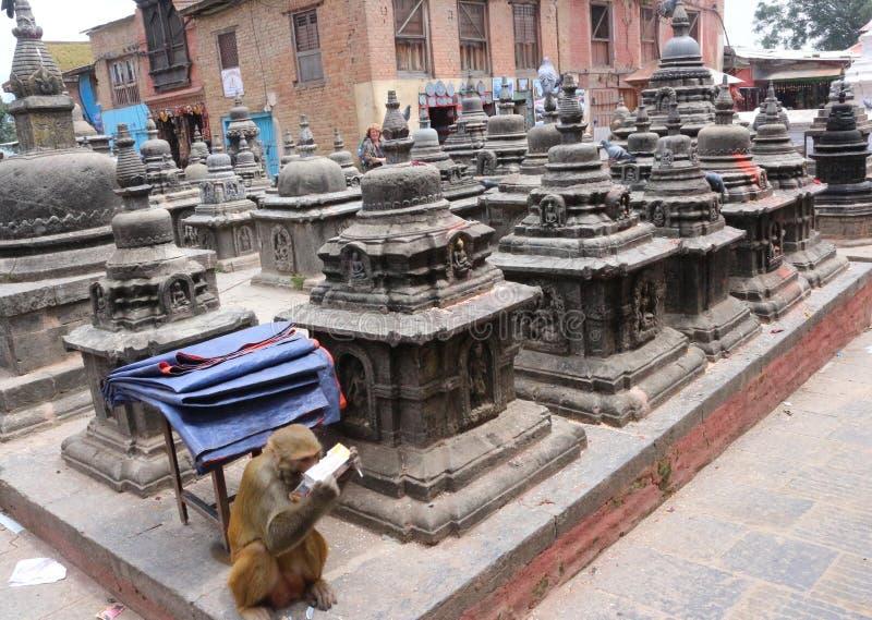 Swayambhunath małpy świątynia, Kathmandu, Nepal Święty, buddhism zdjęcia royalty free