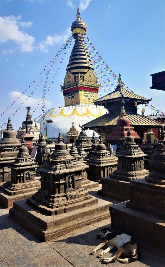 Swayambhunath Stupa, Kathmandu, Nepal mit Schlafenhund lizenzfreie stockbilder