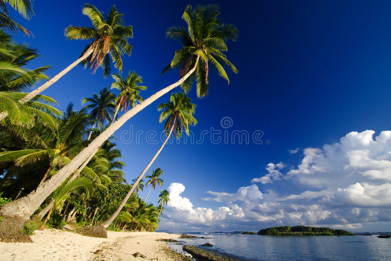 Swaying palm paradise royalty free stock photos