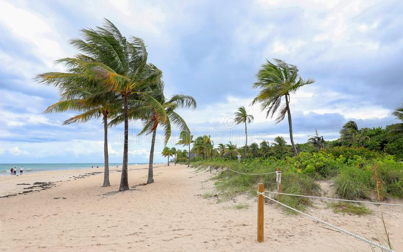 Swaying palm trees on Fort Lauderdale Beach. royalty free stock photos