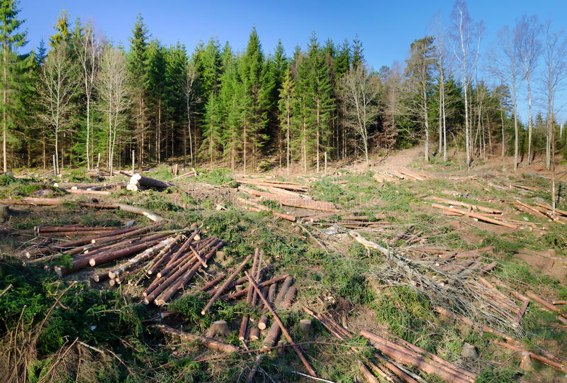 Swedish deforestation stock images