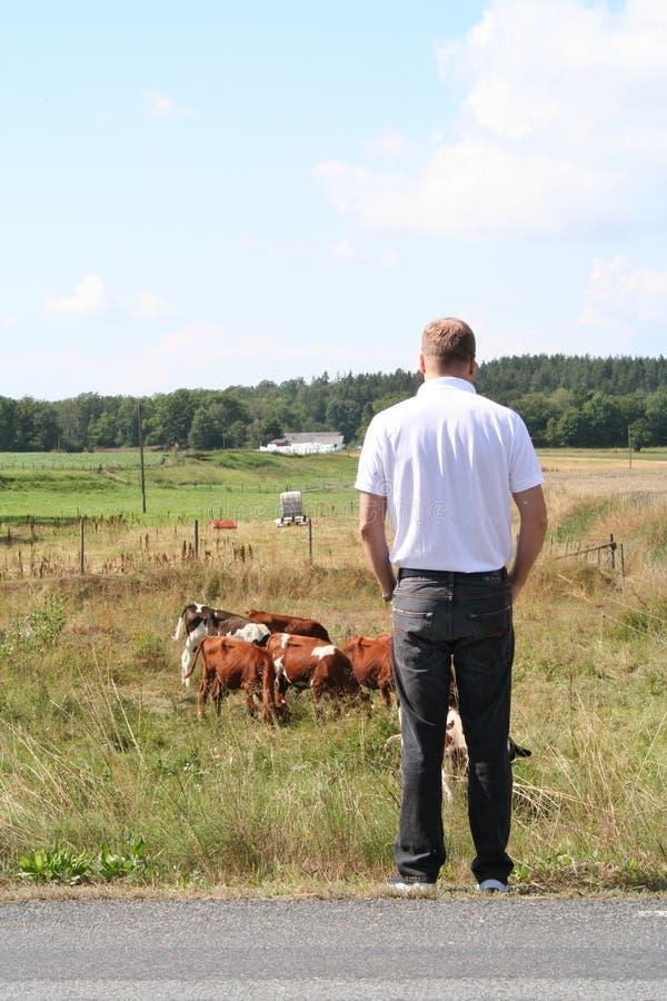 Download Swedish farmer stock photo. Image of grass, blue, shirt - 7117356