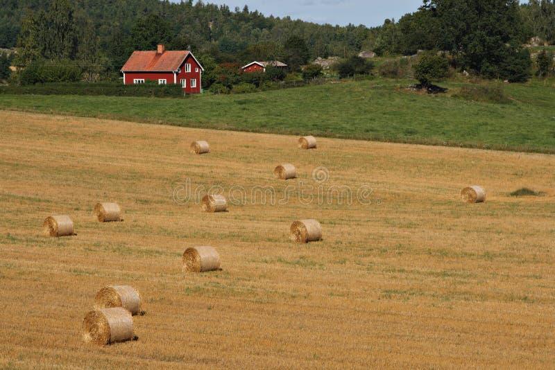 Swedish landscape stock images