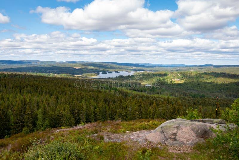 Swedish landscape with pine trees stock image