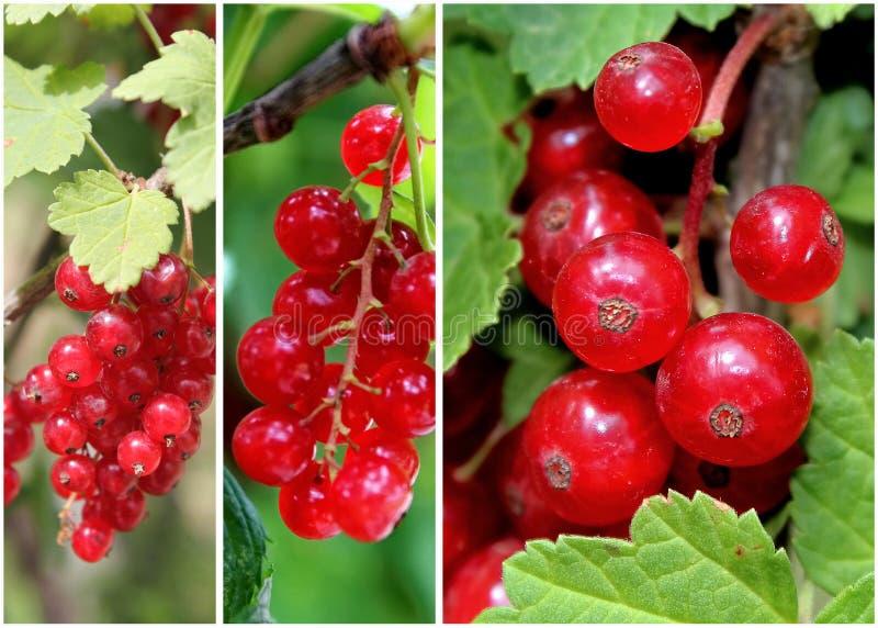 NAMI-NAMI: a food blog: Kladdkaka or a Swedish lingonberry and ...