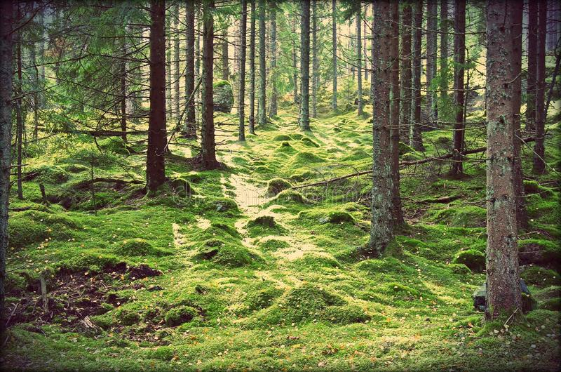 Swedish Magical Forests royalty free stock images