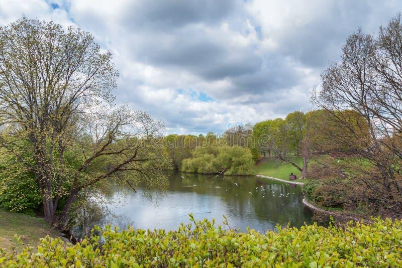 Swedish natural area royalty free stock photo