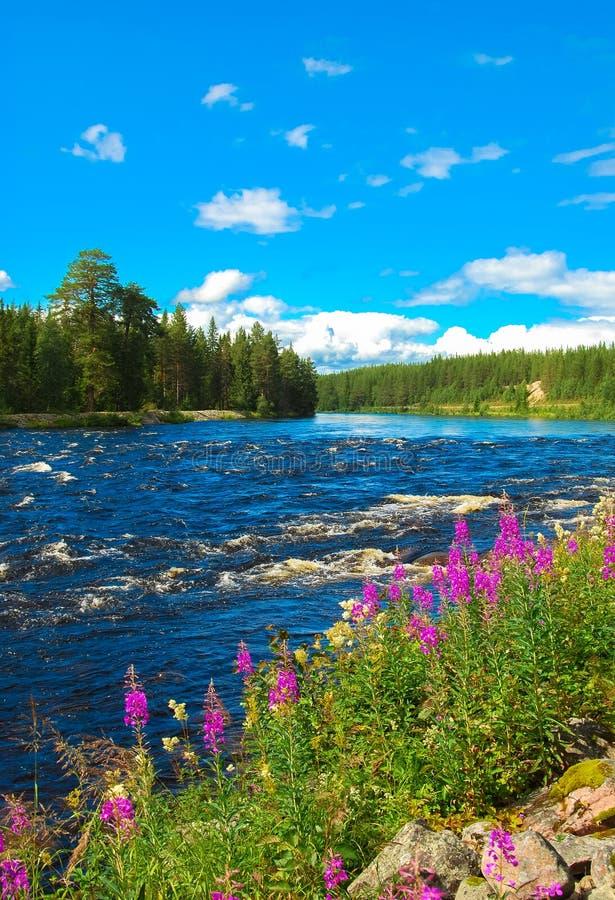 Swedish Summer Nature Stock Photo Image 48426657