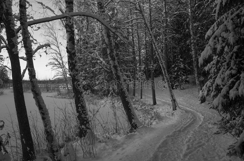 Swedish winter landscape. Black and white winter landscape with snow in Swedish forest royalty free stock photo