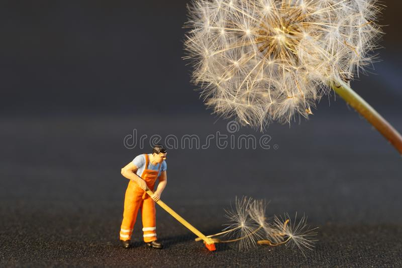 Sweeping Up Dandelion Seeds stock image