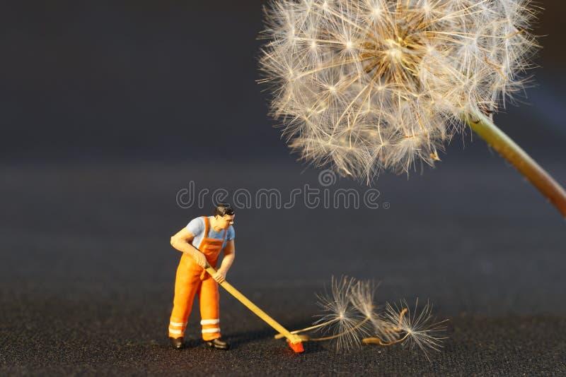 Sweeping Up Dandelion Seeds Free Public Domain Cc0 Image