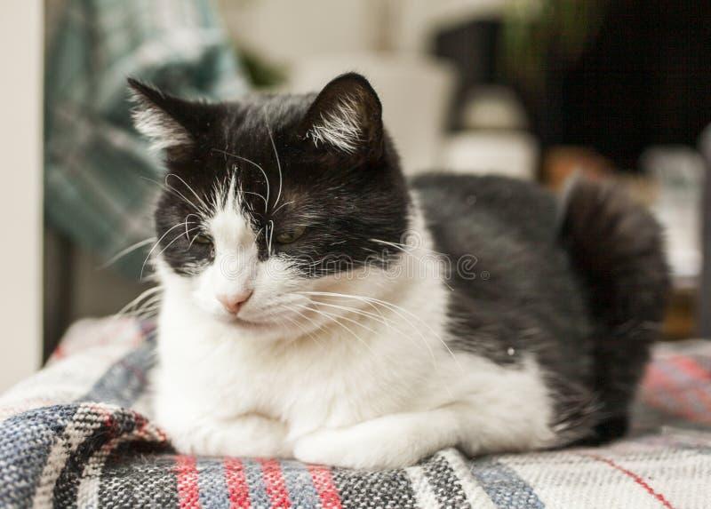 Sweepy, gato blanco y negro - muy soñoliento foto de archivo