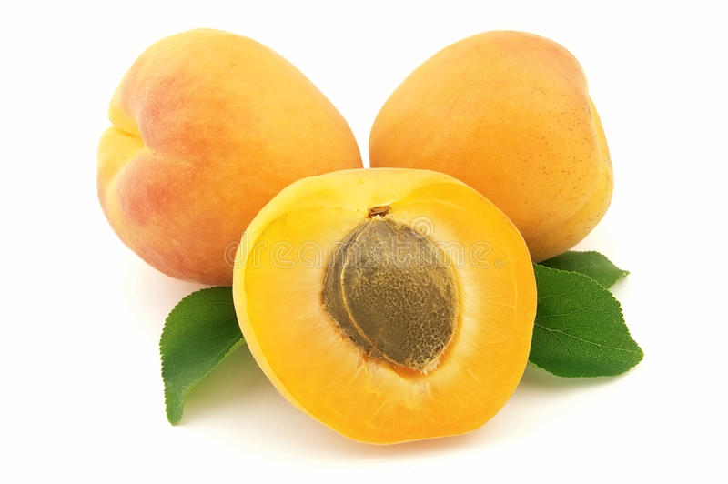 Sweet apricot stock photography