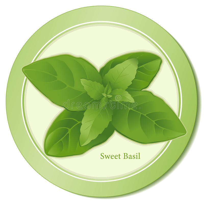 Download Sweet Basil Icon stock vector. Image of condiment, asian - 9827099