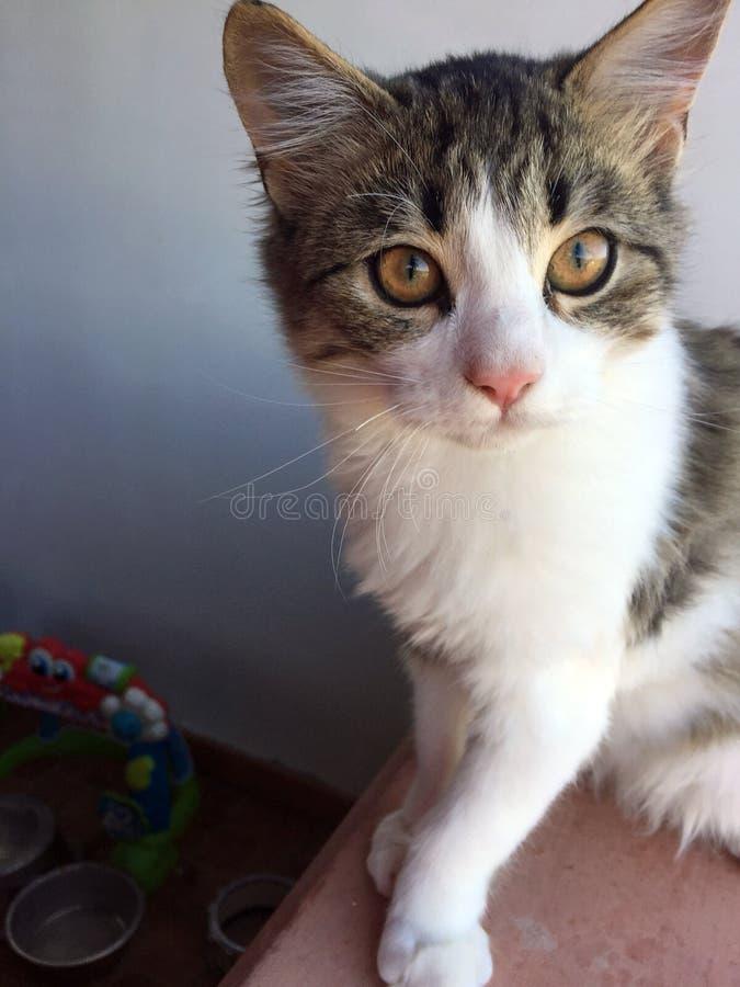 Sweet and beautiful Kitten stock photography