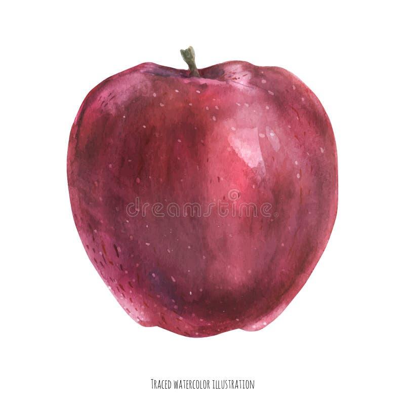 Sweet big red apple. Big red apple fruit, traced watercolor illustration vector illustration