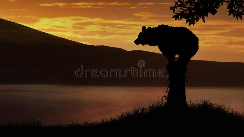 Bear at sunset stock photos