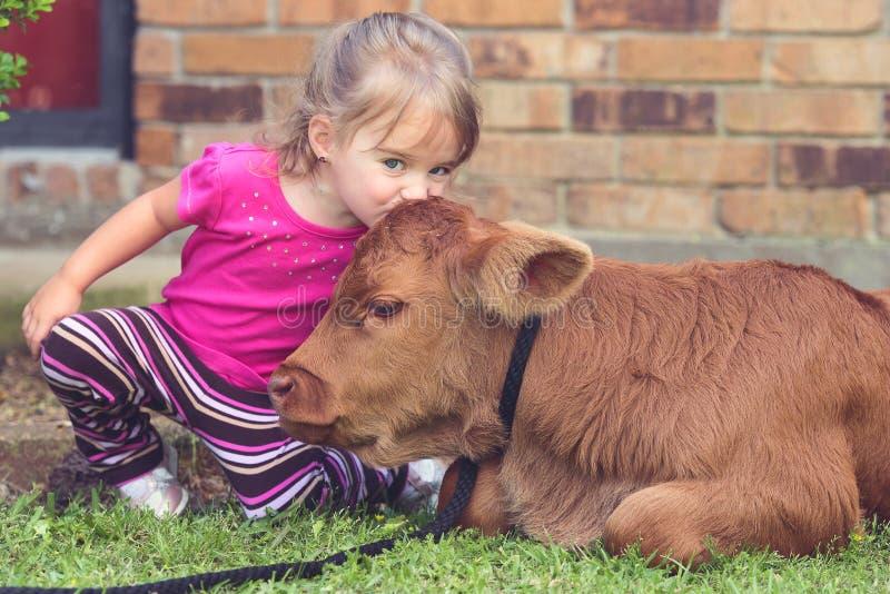 Sweet Calf Kisses royalty free stock photo
