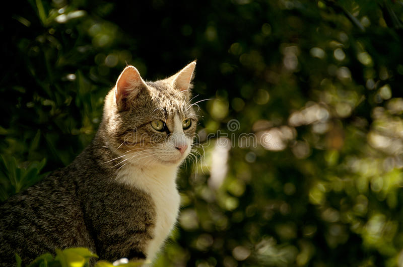 Download Sweet cat stock photo. Image of baby, kitten, pets, cute - 24446122