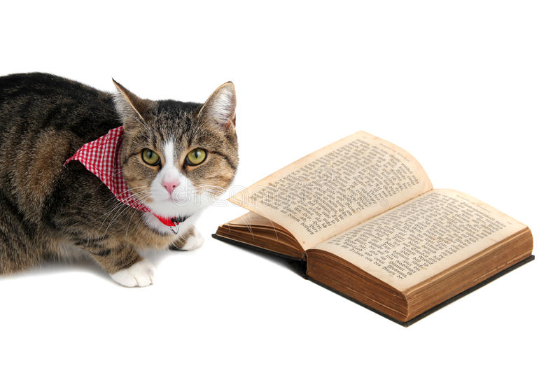 Download Sweet Cat With Bandana Reading A Book Stock Photo - Image: 22054470