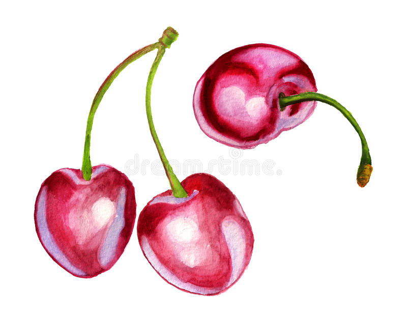 Download Sweet cherries stock illustration. Illustration of ingredient - 32178874