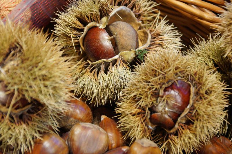 Sweet chestnuts. stock photos