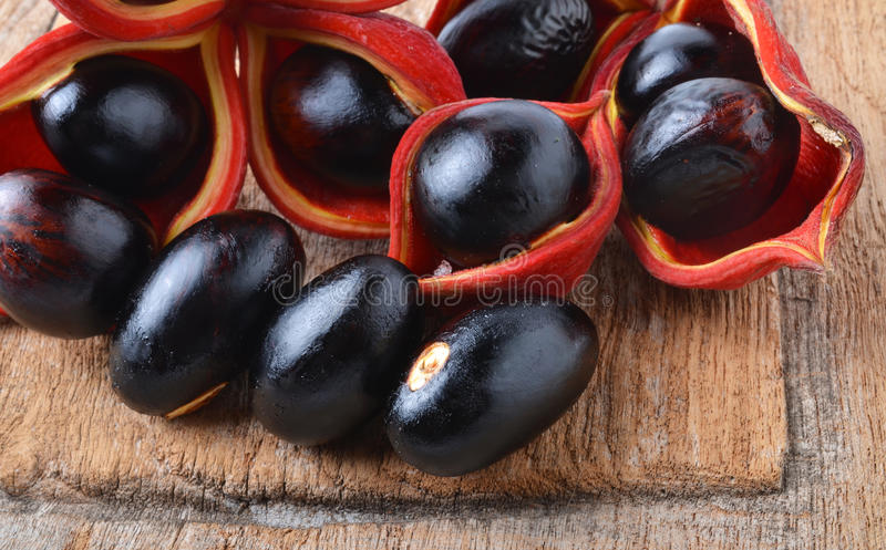 Sweet chestnuts (Sterculia monosperma) royalty free stock image